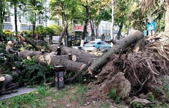 مصرع 11 شخصا وانهيار مبان وأشجار في رياح شديدة شرق الصين | فيديو