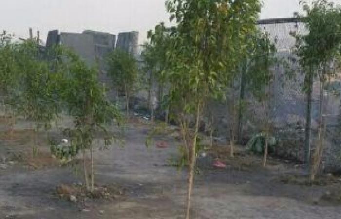 البيئة تعلن توفير 222 ألف شجرة لزراعتها فى 21 محافظة ضمن مبادرة حياة كريمة