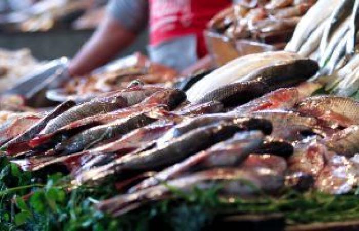 أسعار الأسماك اليوم بسوق العبور.. انخفاض سعر البلطى والمكرونة والكابوريا