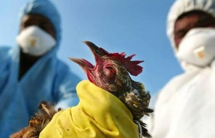 H10N3   الصين تعلن تسجيل أول إصابة بشرية فى العالم بأنفلونزا الطيور